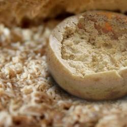 Описание и характеристики необычного сыра касу марцу (casu marzu)
